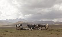 Kyrgyzstán 2010 - obrázek 34