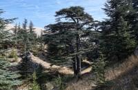 Libanon 2019 - obrázek 36
