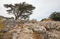 Libanon 2019 - obrázek 45