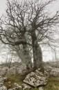 Krajia a příroda - obrázek 4