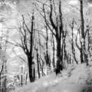 Krajia a příroda - obrázek 5